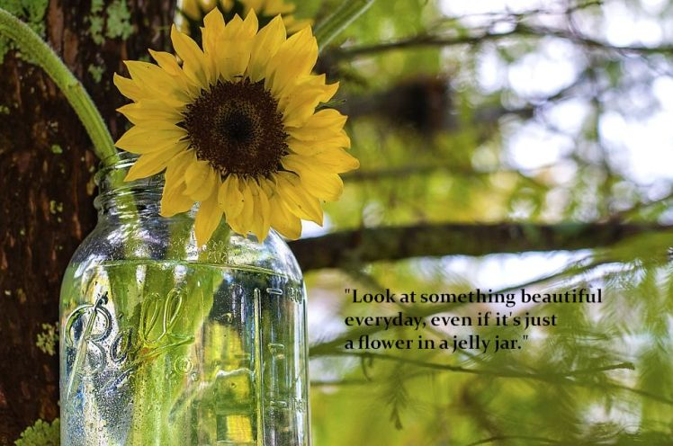 A flower in a jelly jar - sunflower image