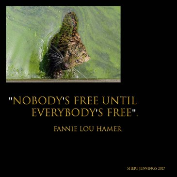 Nobody's free until everybody's free image